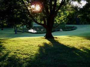 sun-setting-on-big-yard-and-pond-1391335